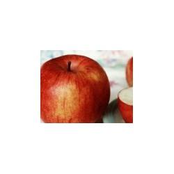 Jabłoń  Jonica